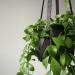 Leather plant hanger black | Minimalistic design